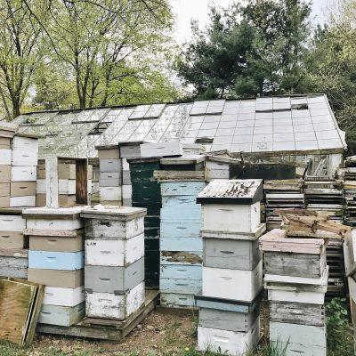 Bee Diaries – 001
