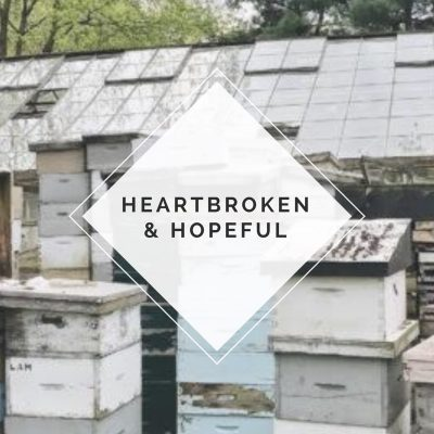 Beekeeper Diaries: Heartbroken and Hopeful